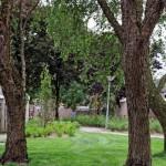 aanleg en renovatie openbare groenvoorziening